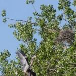 Heron Nest
