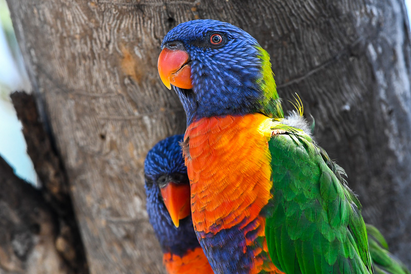 zoo-nikond500-300 lens-web-3770