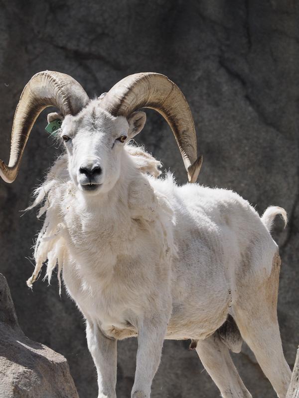 Denver zoo, Olympus 300 f4