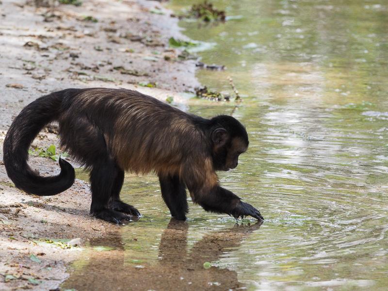 Denver zoo, Olympus 300 f4, monkey