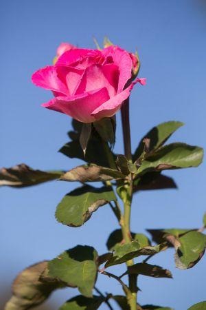 roosevelt-park-rose-garden-web-38.jpg